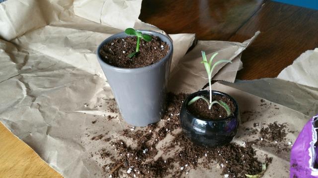 DIY House Plant