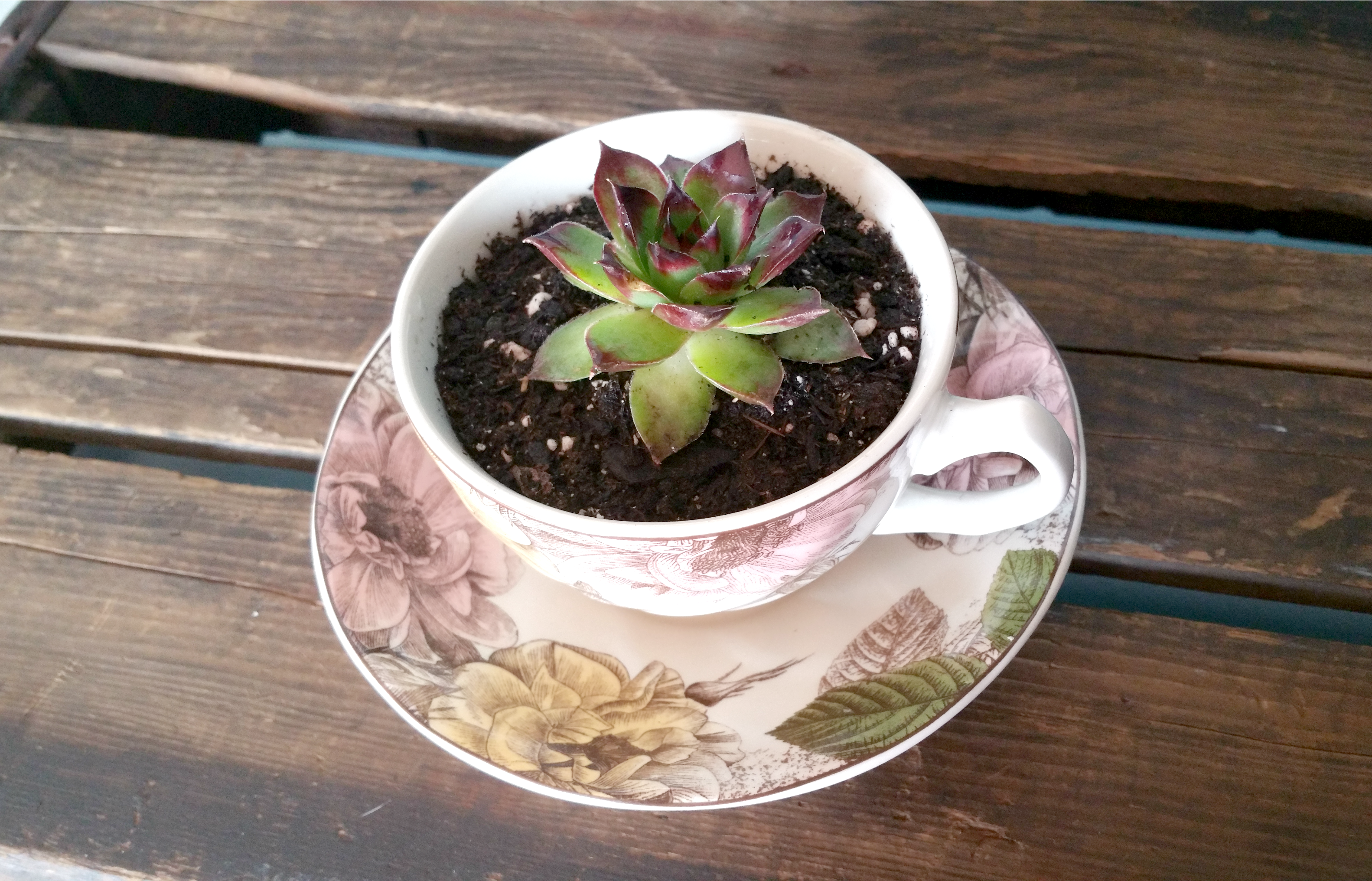 DIY Mother's Day Gift Succulent