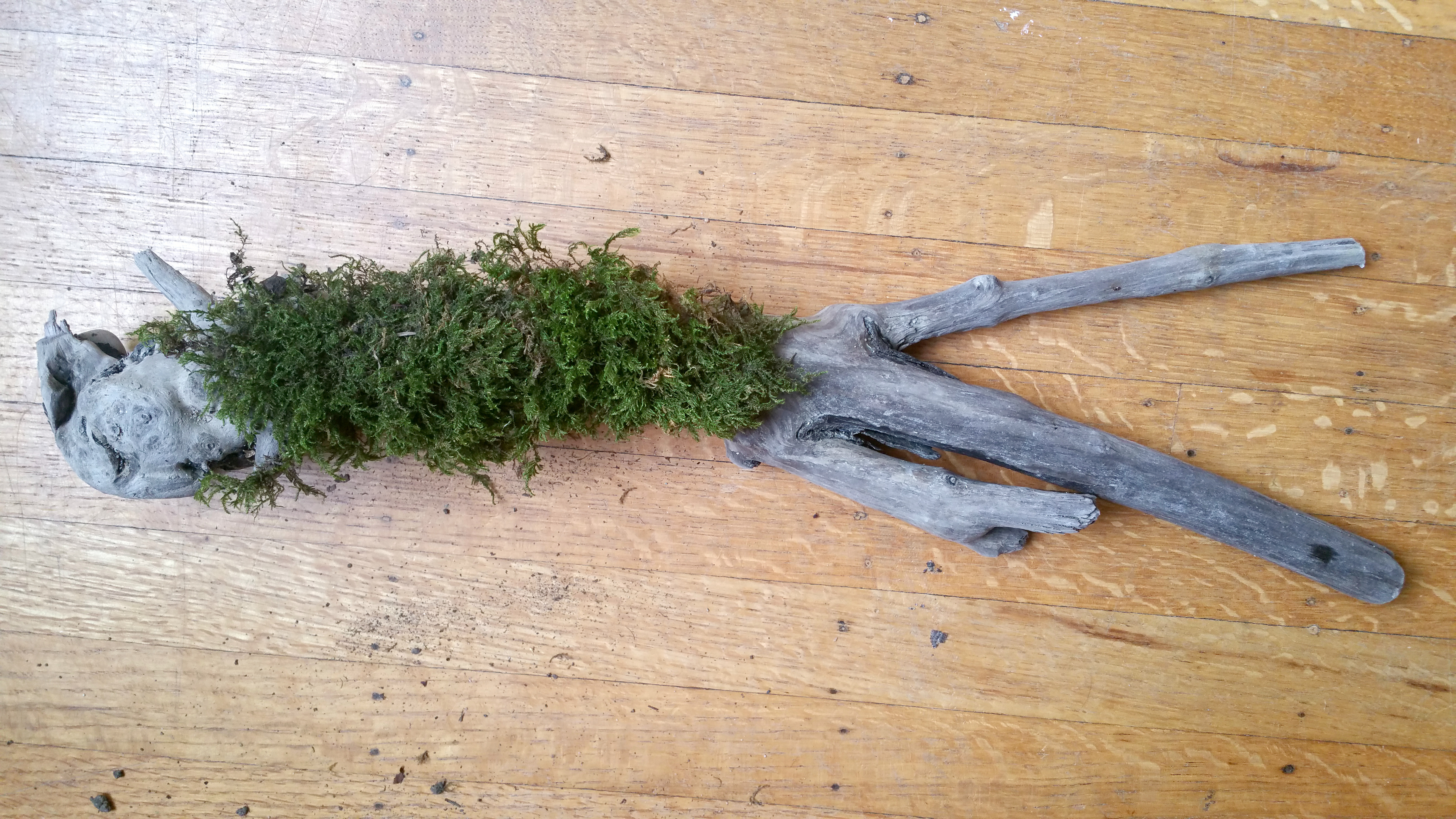 moss and driftwood DIY